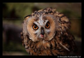 Owl: Lunch by TVD-Photography