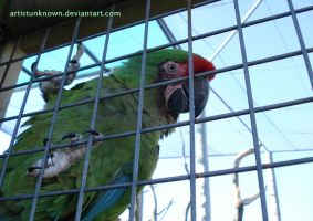 Green parot by ArtistUnknown