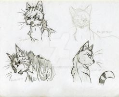 Warrior Cats Leaders 1 by KasaraWolf