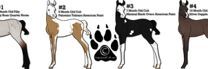Foal Adoptables- OPEN 1 Foal Left!! by CookieLoveXO