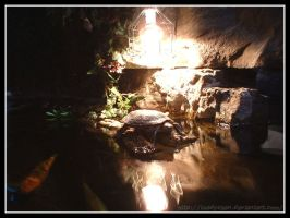 Photo -:- Comfy Turtle by Toadychan