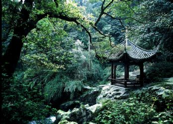 Forest at Emei Mountain by davidmcb