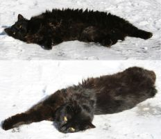 black cat on white snow 2 by two-ladies-stocks