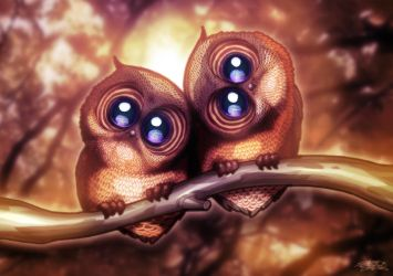Two Cute Owls by JarrrodElvin