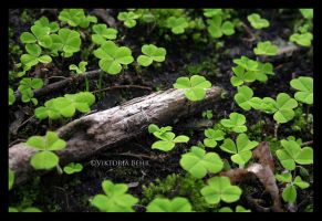Clover by mauzZ