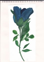 Blue Tulip using water colours by Pseudonymousartist