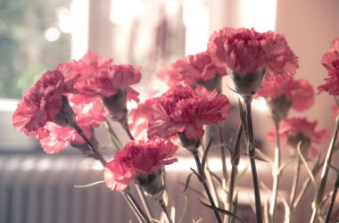 flowers in the evening sun by stupidduck