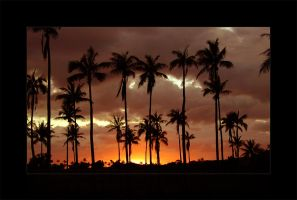 Palm Sunset by Chacalxxx