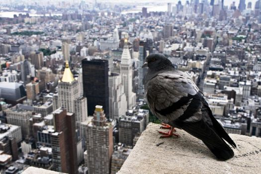 Empire State Biulding View by ON1TZUKA