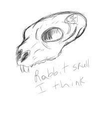 Rabbit Skull by Phycosmiley