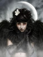 Dark Angel by CindysArt