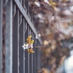 22.44 spring in the city by cloe-patra