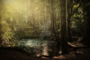 Forest Lake Premium Stock by MaryCapogna
