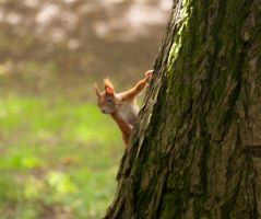 Internship Photograhs - Caught squirrel 2 by HinaTheBlue