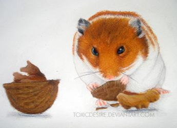 Hamster color pencil by toxicdesire