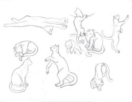 Cat study sketches part 1 by sapphire-blackrose