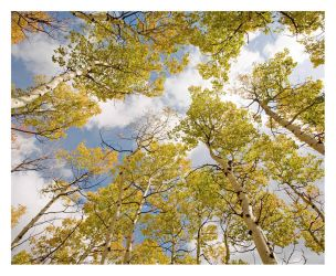 Aspens to Heaven by hikester