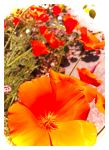 99 Bright Orange Petals... And More by TeaPhotography