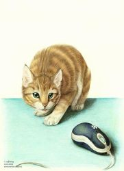 Cat and mouse by blayrd