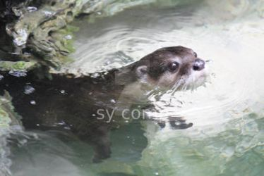 otter by cOmpilatiOnkiD