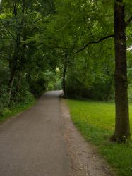 The Empty Green Road by cmcvs