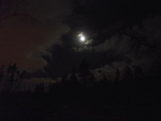 Moon and Jupiter over the forest 2 by DanaVarahi