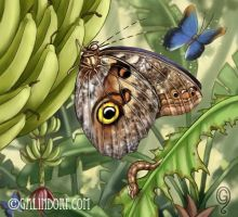 Owl Butterfly by Galindorf