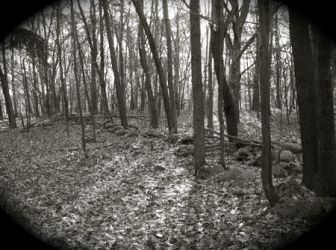 Worcester Woods 7 by scarygirl67