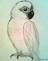 Conure by foxtribe