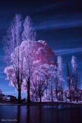 The Cotton Candy Tree by comicidiot