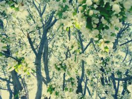 Crabapple Blossoms by jessamaciejewski