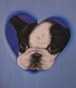 Lovely Boston Terrier by blakdragoon