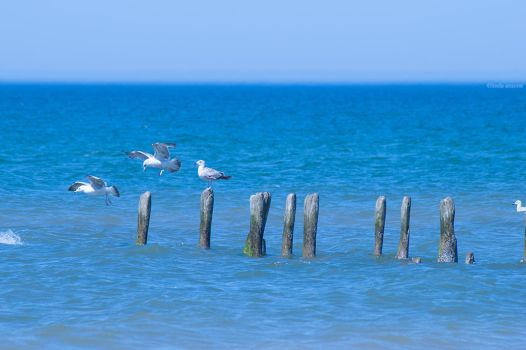 this land belongs to the gulls by LindaMarieAnson