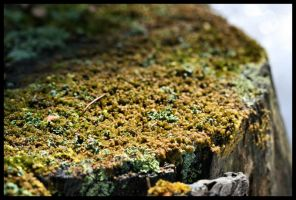 Spring Moss by NOS2002