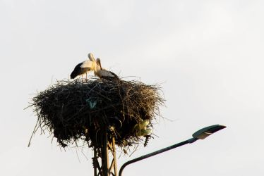Two Storks by Anonimus79