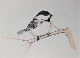 Chickadee ink by DevilishEvelyn