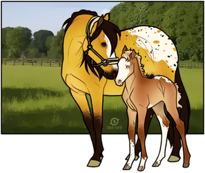 COS - Foal - FOR SALE by Stal-HindeHei