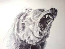 Bear-biro by lownlymusic