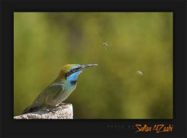Little Green Bee Eater by Sultan-AlZaabi