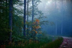 Forest path by LillianEvill