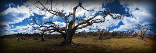 Nashoba Valley Orchard by biffbouse