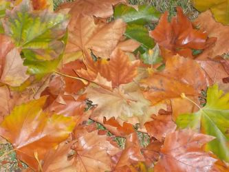 Leaves on the Ground by Amatao