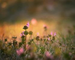 more flowers in oklahoma by lovemyscars