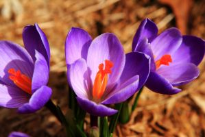 First Flowers of Spring by Celem