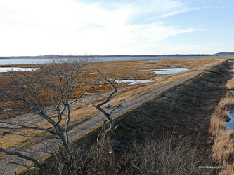 Winter solstice salt marsh by Mogrianne