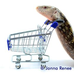 What do lizards shop for? by SillyJonna