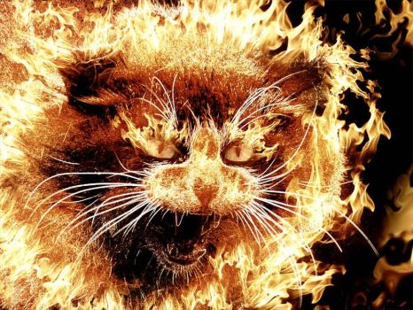 very angry cat by yansek