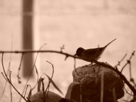 Chickadee on a Rock by glasswillow