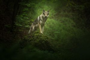 Into The Woods by zouzanne