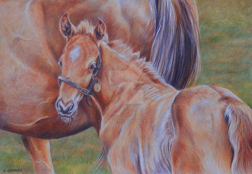Mare and foal by Stephanie-Greaves